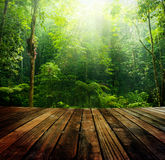 Green forest. Stock Photos