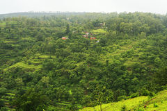 Green forested landscape Stock Images