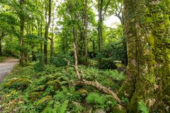 Green forests in the Muckross area of Killarney National Park stock photo