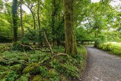 Green forests in the Muckross area of Killarney National Park stock images