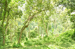 Green Forests at Ubud Stock Photos