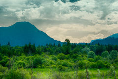 Green forrest meadow in front of mountain Stock Photos