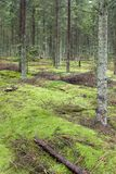 Green forrest moss. Autumn forrest and green moss royalty free stock images