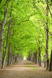 Green forrest woods background with perspective walking path road Royalty Free Stock Images
