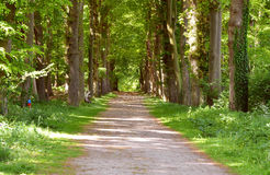 Green forrest woods background with perspective walking path road Stock Image