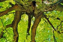 green fortfarande Royaltyfria Bilder
