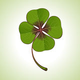 Green four-leaf clover Stock Images