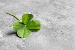 Green four-leaf clover on gray background. With space for text royalty free stock images