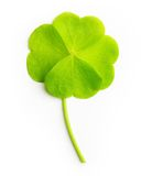 Green four-leaf clover leaf isolated Royalty Free Stock Photos