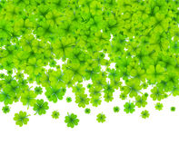 Green four-leaf clovers on white background. Green vector four-leaf clovers on white background Royalty Free Stock Photography