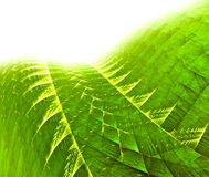 Green fractal background Royalty Free Stock Images