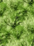 Green fractals background. Computer generated fractals pattern; could be used as tiled background Stock Images