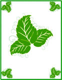 Green frame. With leaf/border Royalty Free Stock Photos