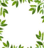 Green frame Stock Photos