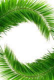Green frame. Artistic green frame with two palm leafs stock image