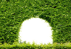 Green frame. Real green plant frame in park Royalty Free Stock Photo