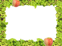 Green frame and apple royalty free stock images