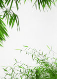 Green frame of bamboo leaves. A pretty and natural style frame made with bamboo plant foliage. Clean white background. Empty with copy space. Background outdoor royalty free stock images