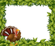 A green frame border with a turkey Stock Photography