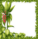 A green frame with a flower Stock Image