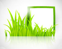 Green frame in grass Royalty Free Stock Images