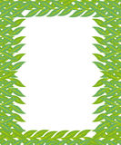 Green frame leaf flower  Stock Image