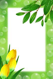 Green frame with leaves, tulips and soap bubbles Stock Photography