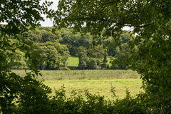 Green frame on lush country, Cornwall Stock Photos
