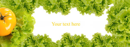 Green frame made from fresh salad Royalty Free Stock Images