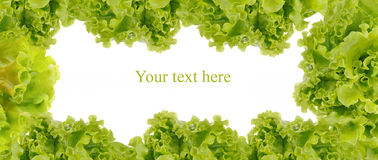 Green frame made from fresh salad Stock Image