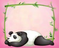 A green frame with a panda sleeping Stock Photos