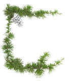 Green frame of a pine branch isolated Royalty Free Stock Image