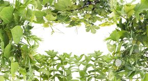 Green frame  from plants Stock Image