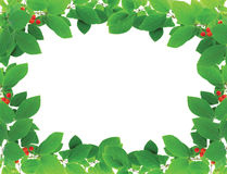 Green frame with red berries Royalty Free Stock Photos