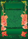 Green frame with red gladiolus flowers Royalty Free Stock Image