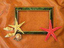 Green frame and shells Royalty Free Stock Photos
