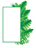 Green frame vector and illustration 01 Royalty Free Stock Images