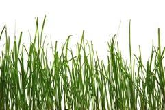 Green fresh Stock Image