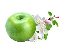 Green fresh apple with leaves and flowers isolated on white Stock Photo