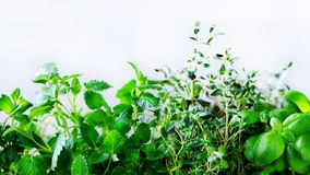 Green fresh aromatic herbs - melissa, mint, thyme, basil, parsley on white background. Banner collage frame from plants Royalty Free Stock Images