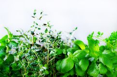 Green fresh aromatic herbs - melissa, mint, thyme, basil, parsley on white background. Banner collage frame from plants Royalty Free Stock Photography