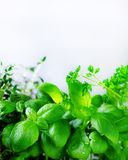 Green fresh aromatic herbs - melissa, mint, thyme, basil, parsley on white background. Banner collage frame from plants Royalty Free Stock Photos