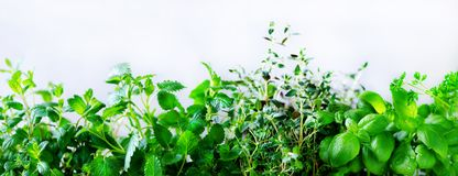 Green fresh aromatic herbs - melissa, mint, thyme, basil, parsley on white background. Banner collage frame from plants. Copyspace. Top view. Toned effect royalty free stock image