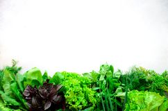 Green fresh aromatic herbs - thyme, basil, parsley on gray background. Food frame, border design. Copyspace. Top view.  Stock Image