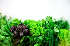 Green fresh aromatic herbs - thyme, basil, parsley on gray background. Food frame, border design. Copyspace. Top view.  Stock Images