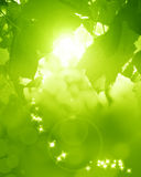 Green and fresh background Royalty Free Stock Photos