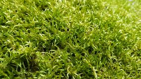 Green fresh background with moss. Stock Photo