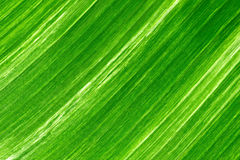 Green fresh banana leaf textured and backrounds Royalty Free Stock Images