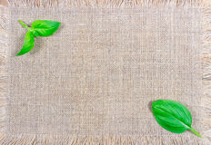 Green fresh basil on canvas background. Stock Photos