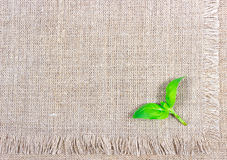 Green fresh basil on canvas background. Stock Photography
